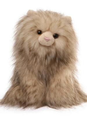 Paxton Cat