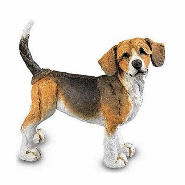 Beagle, Mini by A Breed Apart