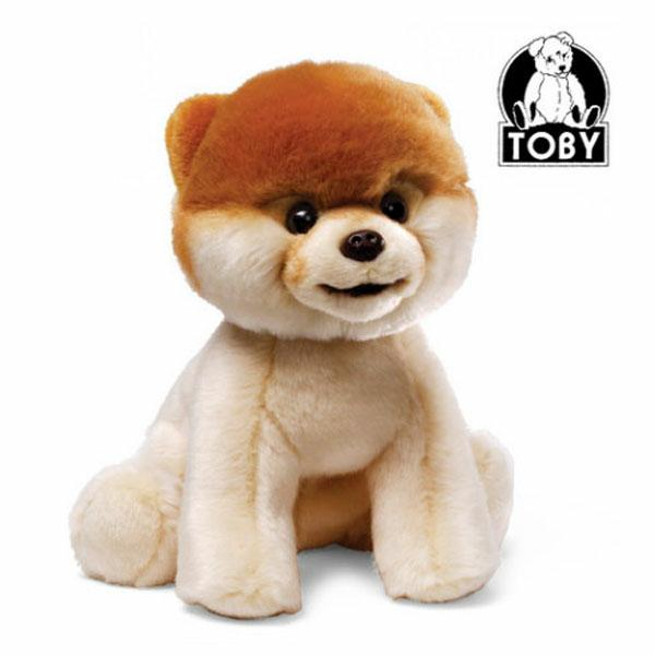 Boo - The World's Cutest Dog